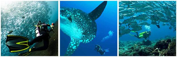 Bali Dive Tulamben